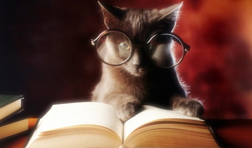 Il segreto di ogni bravo SEO: studiare e aggiornarsi